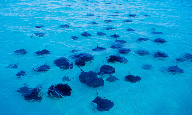 Stingray City and Barrier Reef Snorkel