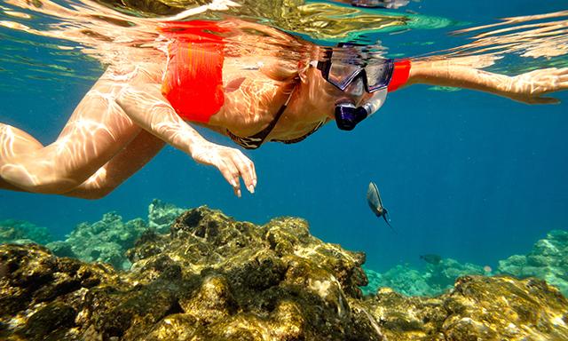 Grand Cayman Snorkel