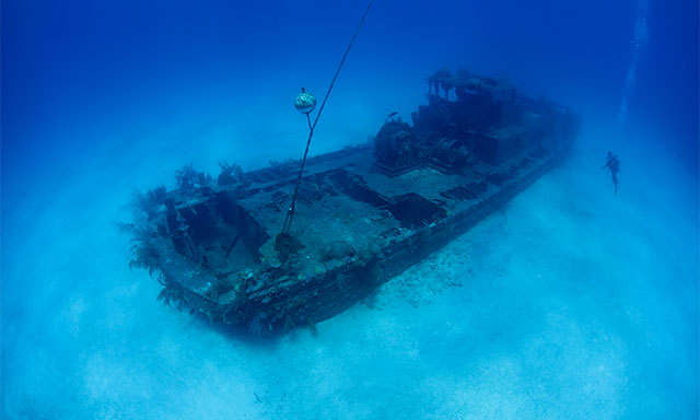 Shipwreck Snorkel at Kittiwake