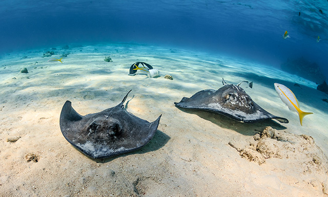 Stingray City & Calico Jack's Beach Break