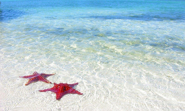 Stingray City Sandbar & Star Fish Point Getaway