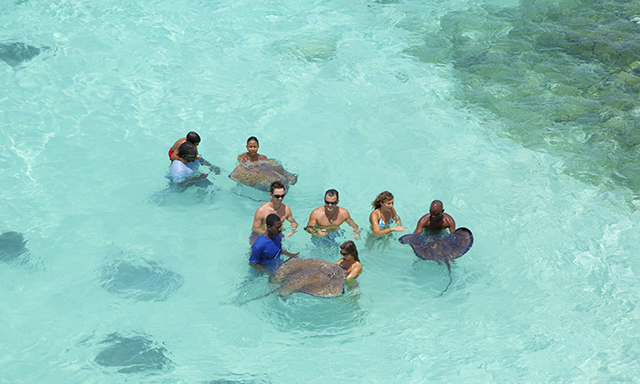 Stingray City Sandbar Swim