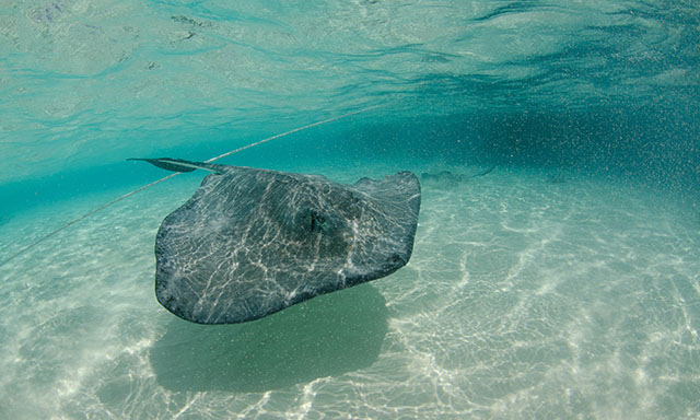 Stingray City With Reef Snorkel & Lunch