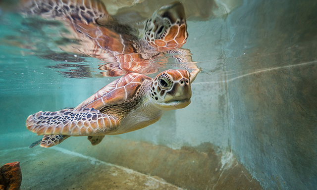 Turtle Encounter & Island Tour