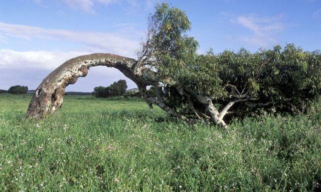 Historic Greenough