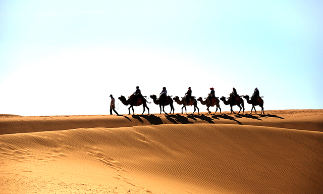 Camels and Maspalomas - Small Group