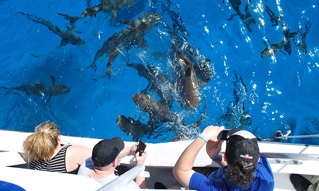 Glass Bottom Boat Tour with Visit to Shark Junction