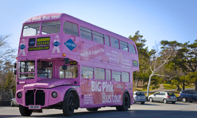 Big Pink Bus - Hop On/Hop Off