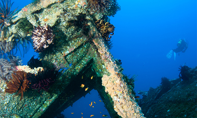 Bermuda Certified Scuba 2-Tank Dive