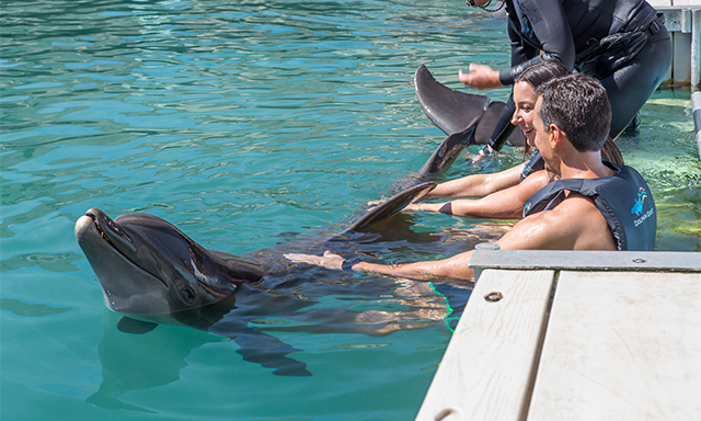 Dolphin Experience at the Royal Naval Dockyard