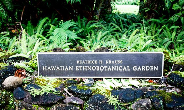 Tropical Rainforest Walk and Pu'u Ualaka'a Lookout