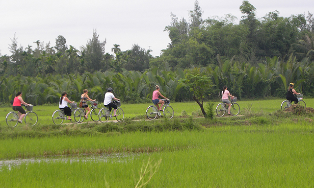 Countryside By Bicycle And Hoi An Town