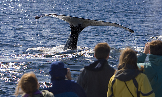 All-Inclusive Whale Watching and ZipRider Combo