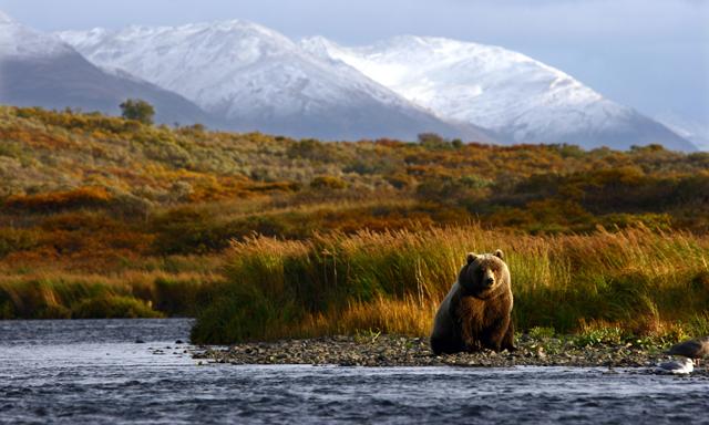Spasski River Valley, Wildlife & Bear Search