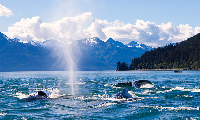 Mendenhall Glacier, Whale Watching and Wildlife Quest