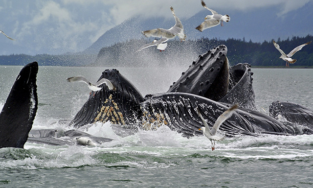 Alaska's Whales, Glaciers & Rainforest Trails