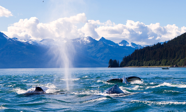 Alaska Culinary Experience and Evening Whale Quest