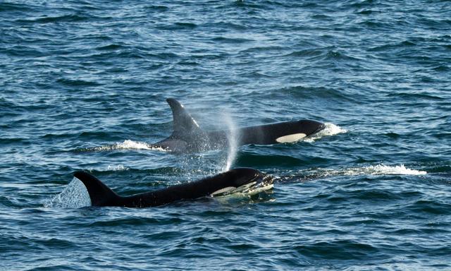 Whale Quest, Orca Point Lodge & Mendenhall Glacier
