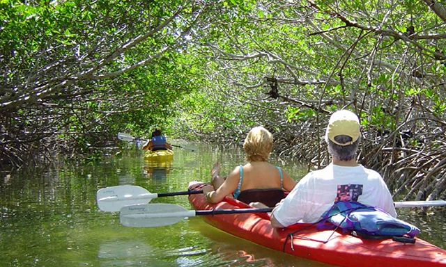 Kayak Nature Tour