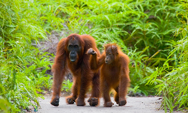 Cultural Discovery and Borneo Wildlife Encounter