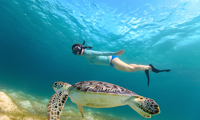 18th Palm Snorkel Tour Featuring National Geographic Snorkeler