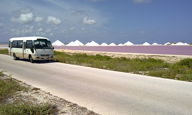 Bonaire Highlights option 3 hours