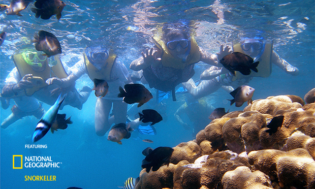 Labadee Snorkel Safari