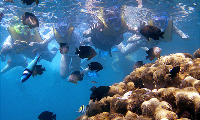 Labadee Snorkel Safari Featuring National Geographic Snorkeler Gear