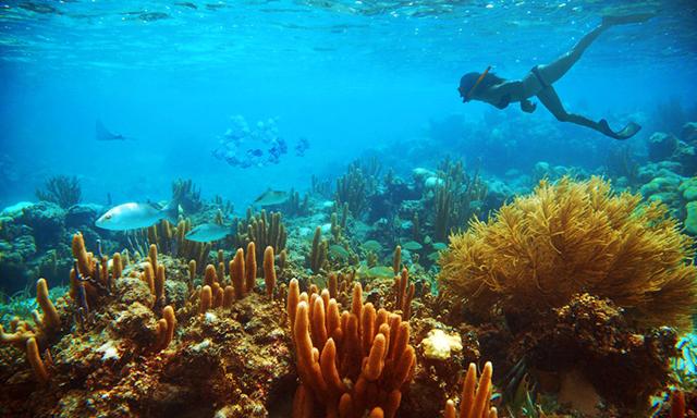 Lanai Snorkel & Dolphin Watch