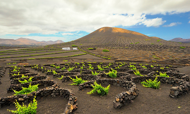 Lanzarote Wine Route