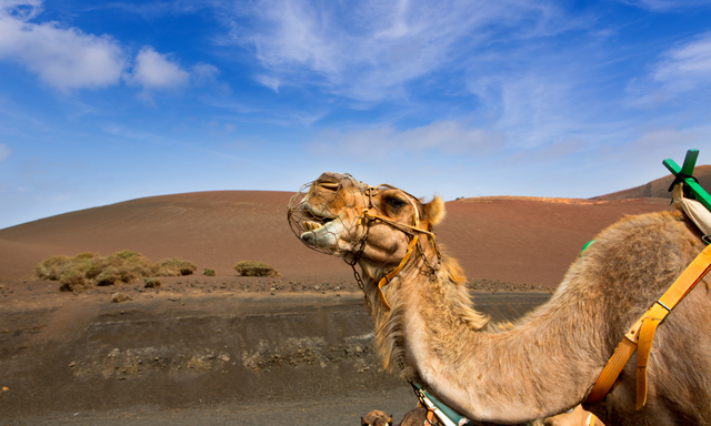 Camel Ride & Fire Mountains- Small Group