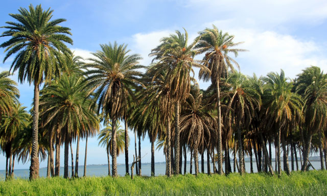 Fijian Homestead and History
