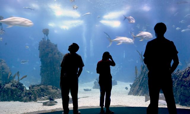 Lisbon & Aquarium