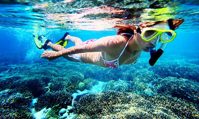 Coral and Clam Garden Snorkel Experience