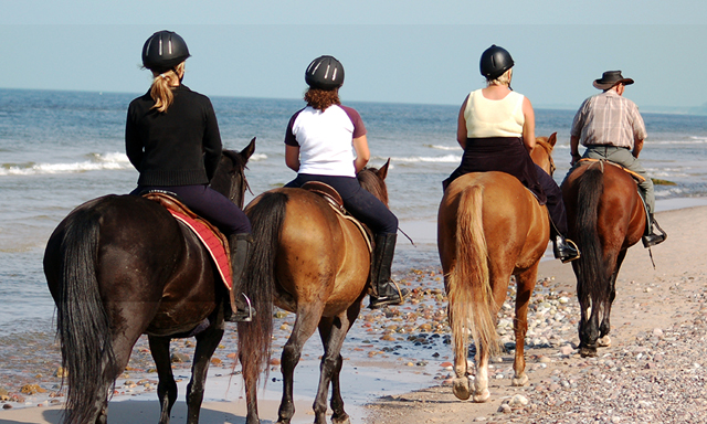 Santos Horse Track Safari