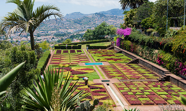 Funchal Highlights and Botanical  Gardens