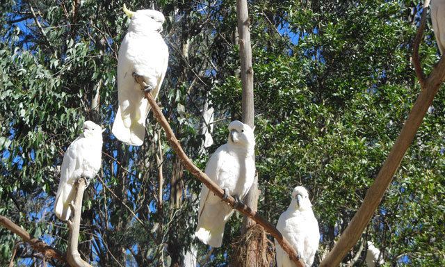 Dandenongs, Birds and Australian Crafts