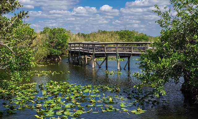 Everglades Eco-Adventure (In Transit)