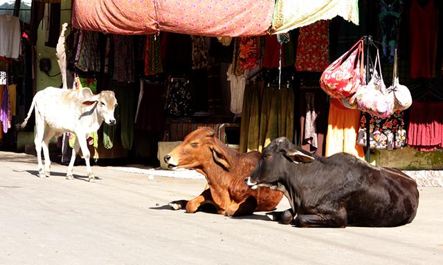 Mumbai Masala Market Walk