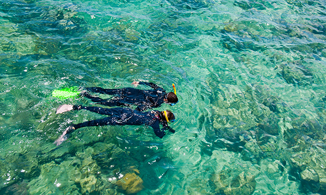 Reef Snorkeling Discovery