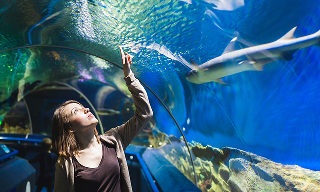Hawkes Bay Aquarium and Winery Museum