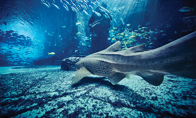 Discover Atlantis: Marine Life Magic