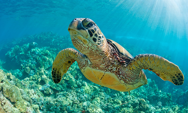 Adventure Yacht Turtle and Reef Snorkel
