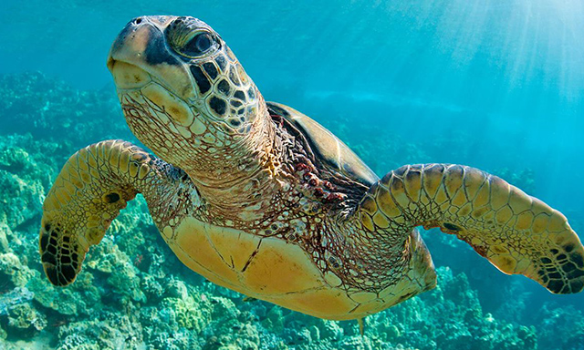 Adventure Yacht Turtle & Reef Snorkel with Pat Vellner & Chris Irwin