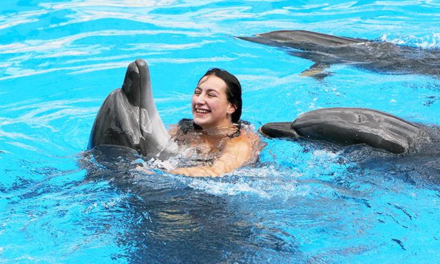 Balmoral Island Dolphin Encounter and Beach Break