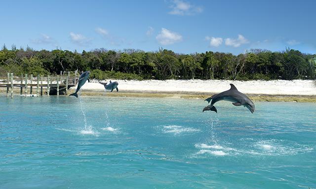 Balmoral Island Dolphin Swim and Beach Break