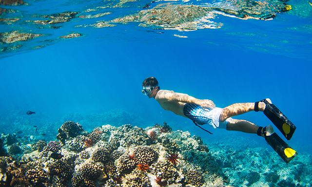 Rainbow Reef Snorkel Tour featuring National Geographic Snorkeler