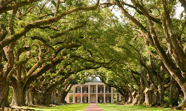 Oak Alley Mansion & Plantation Tour