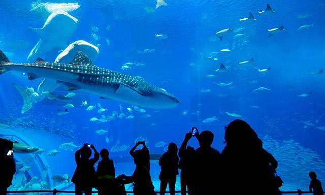 Churaumi Aquarium & AEON Mall Okinawa Rycom