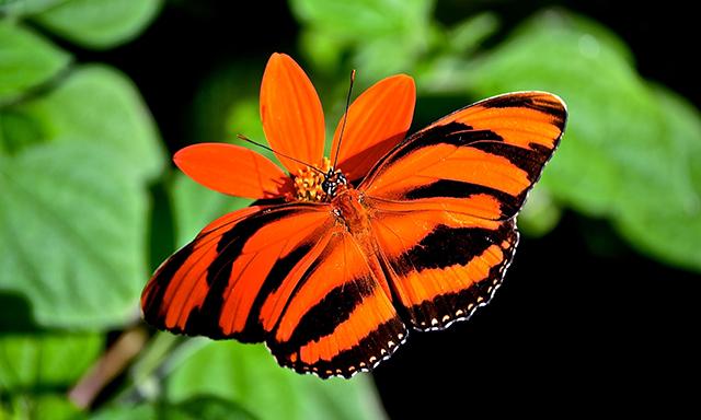 Aruba's Natural Bridge, Butterflies & Beach Break